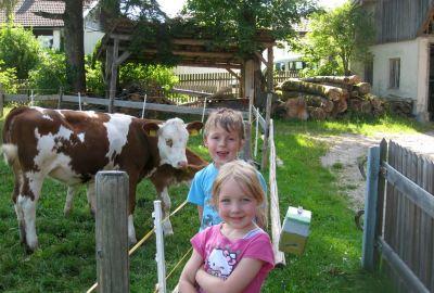 Kinder und Kälber